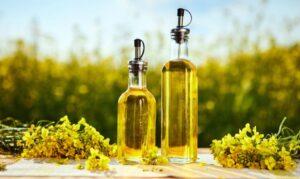 canola oil as oil lamp fuel