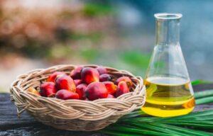 palm kernel oil benefits