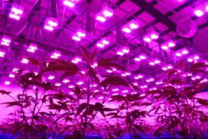 highest yielding led grow light